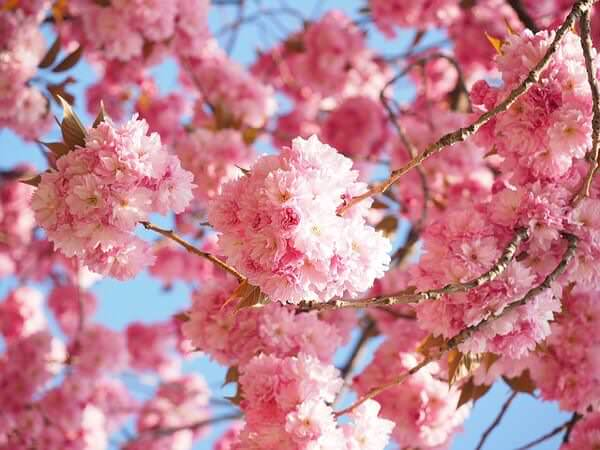 雨に弱いのは桜だけではない!?髪の毛にも影響を与えます!