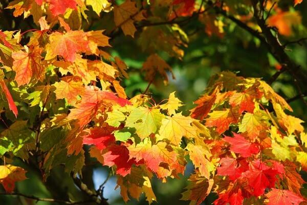 秋の運動はカラーに良い!?