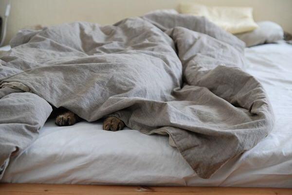 冬の睡眠の質をあげるのに○○が有効!?
