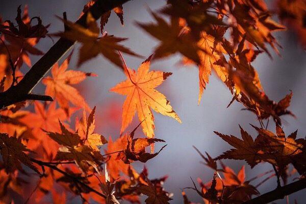 秋に気をつける事