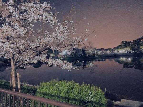 桜の綺麗な写真の撮り方
